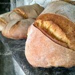 Impastare il pane con il poolish o la biga